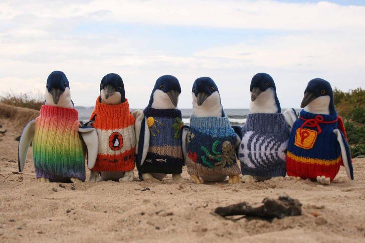 pinguins de suéter