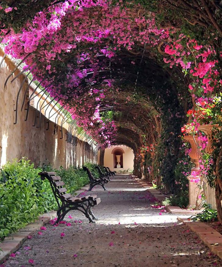 rua com túnel de flores