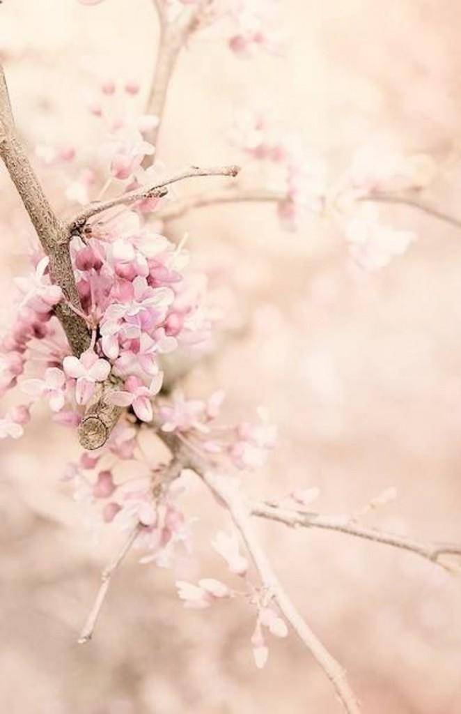 flores rosas palidas