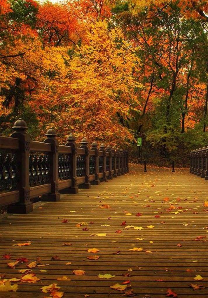 Manhattan - Central Park - Outono