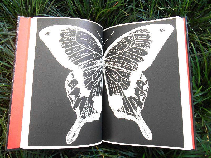 Páginas do livro - O Jardim das Borboletas